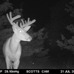 2014 Scott Johnson TC Buck